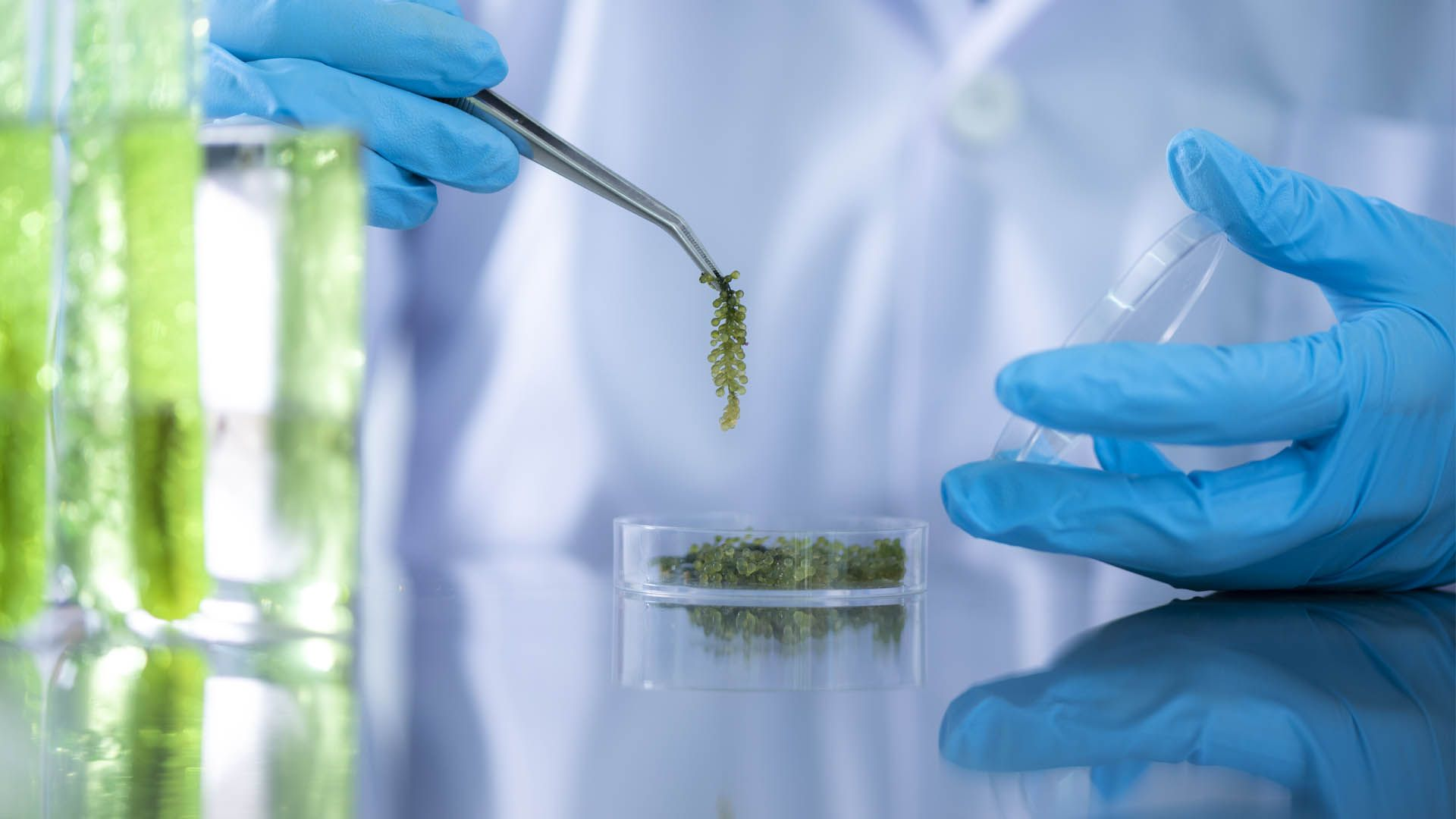 Cannabis and medicinal plant research